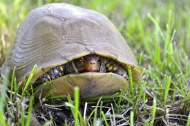 Defensive turtle