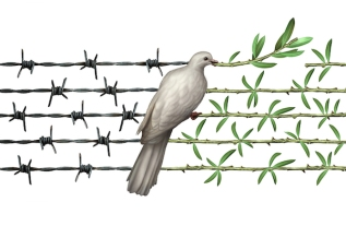 Optimism concept and diplomacy hope symbol as a dove on barbed wire to olive branches as an icon for good will of man and a respect for humanity and a global safer world or a greeting for earth day isolated on white.