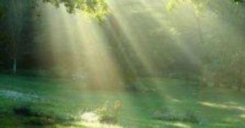 Peace in Meadow