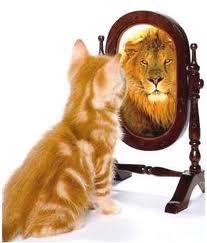 kitty lion